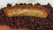 Sausage w/Champagne grapes
