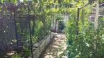 Lin's Garden