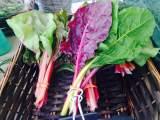 Get Fresh on Fridays – Forrestal Village Farmers Market starts June5